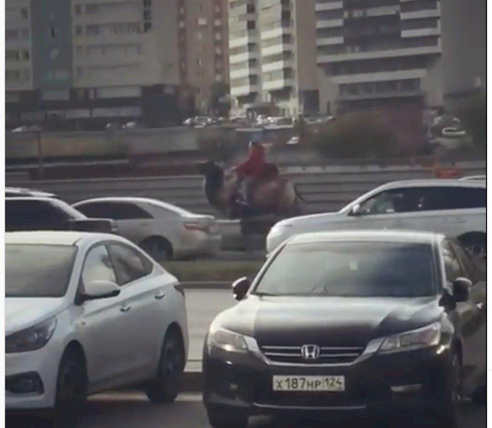 Mujer conduce un camello