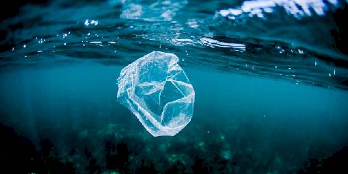 El material natural diseñado para reemplazar el plástico