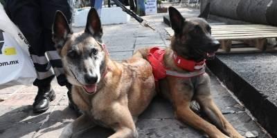 Binomios caninos