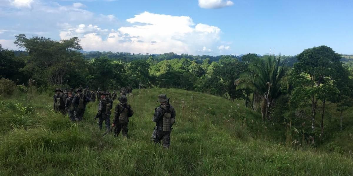 Ejército localiza plantación de droga en Alta Verapaz