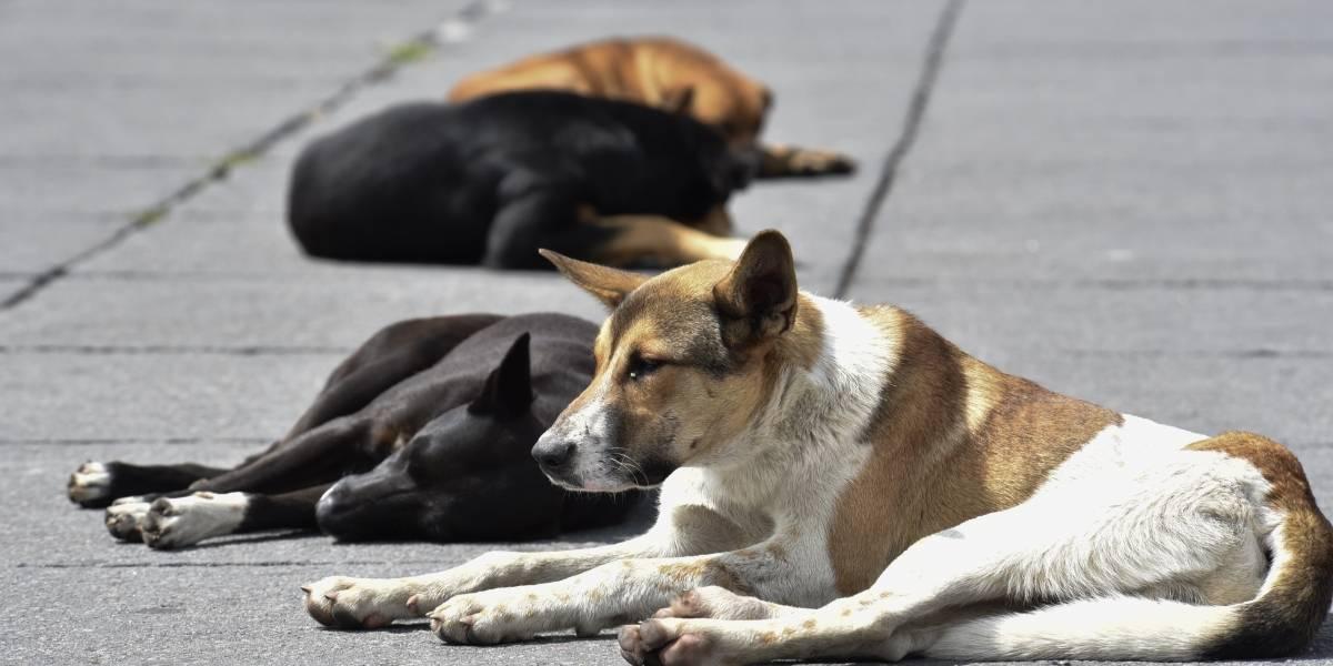 Liberan a mujer acusada de robar y matar perros en Puebla