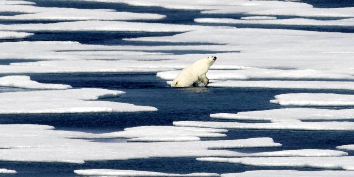 Hielo marino del Ártico tiene fuerte caída en el verano