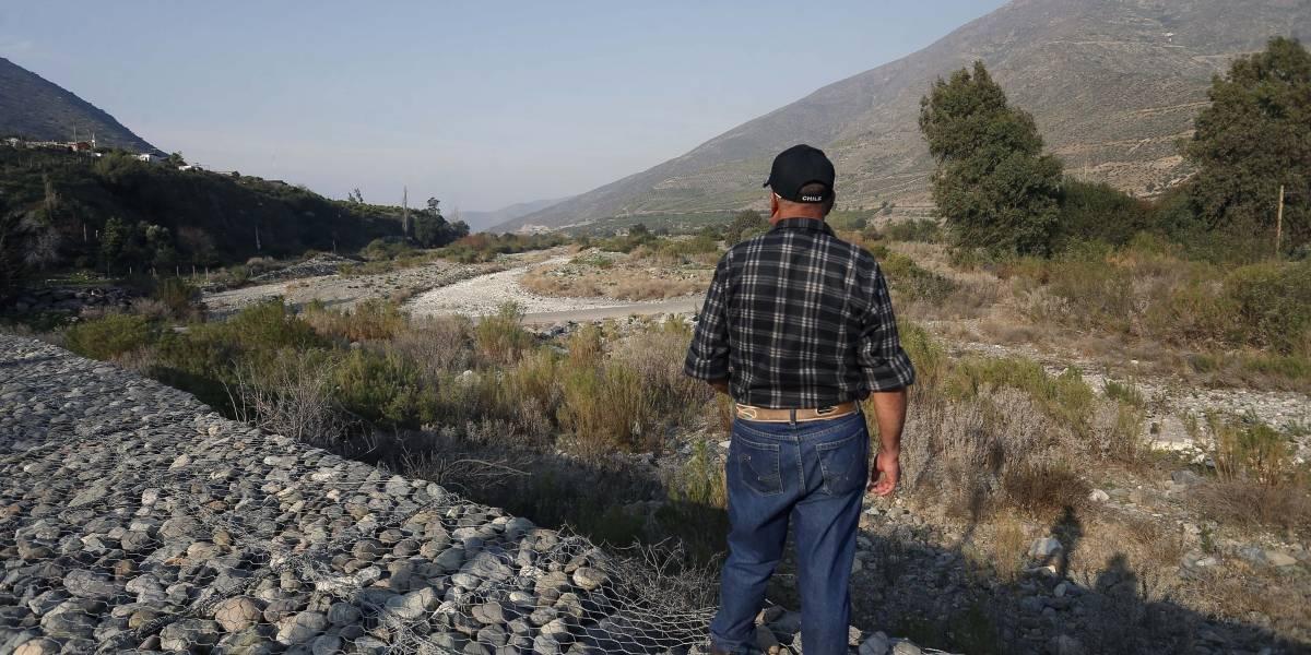 Seco panorama: miles de animales muertos, colmenas famélicas y frutales secos en la zona central