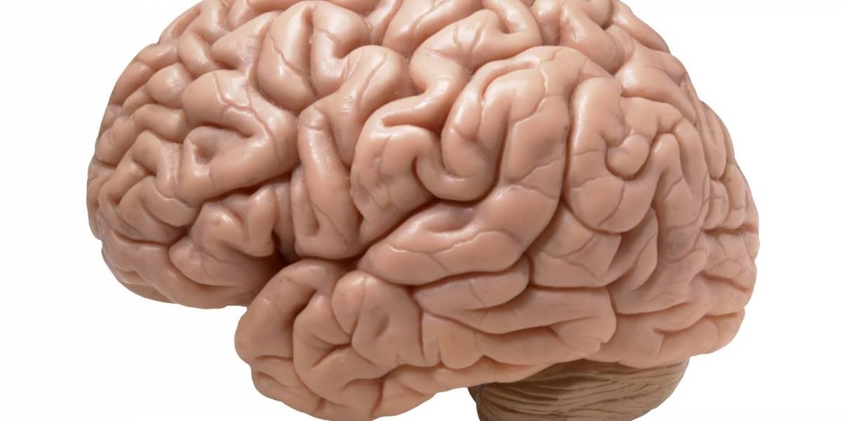 Coronavirus: Covid-19 dañaría funciones cognitivas y el cerebro envejecería 10 años