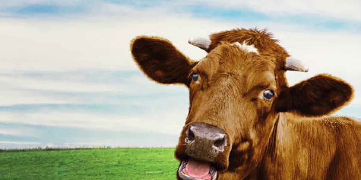 Guía (realista) para dejar poco a poco la carne