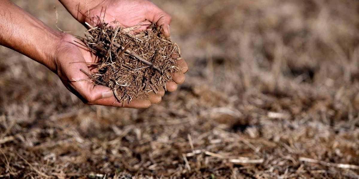 Gobierno no descarta aumento de precio de frutas, carnes y hortalizas por sequía