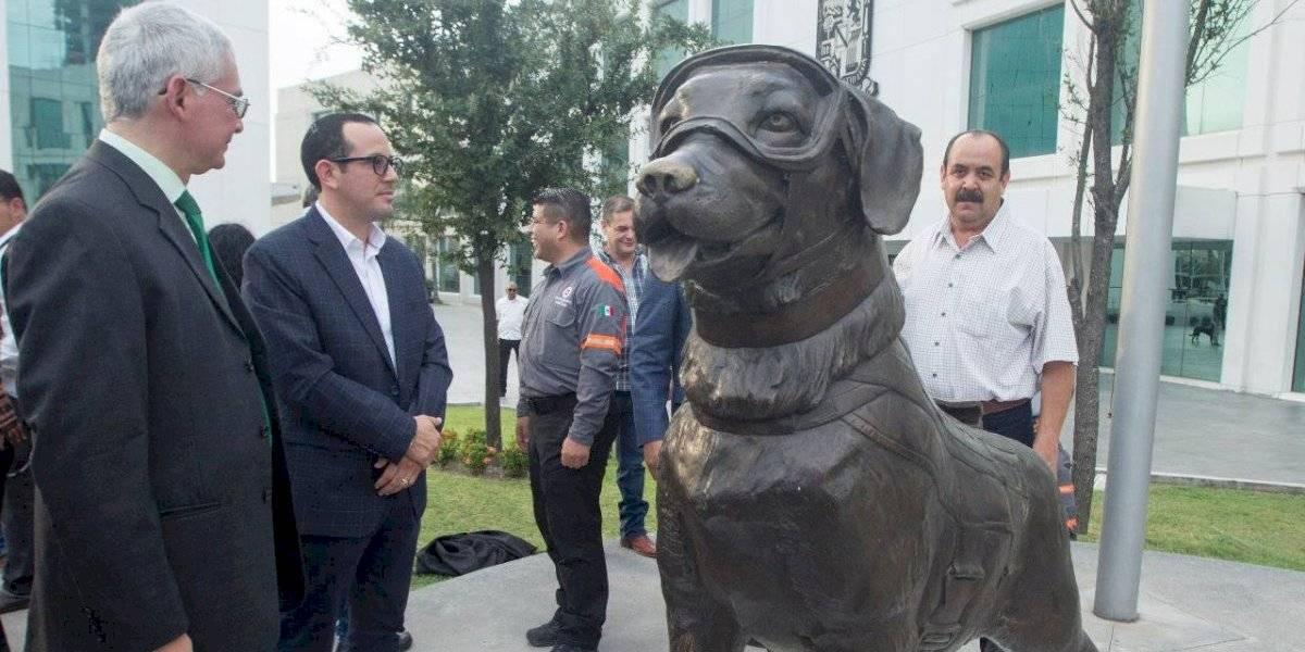 ¡Guau! homenajean a la perrita Frida en Nuevo León