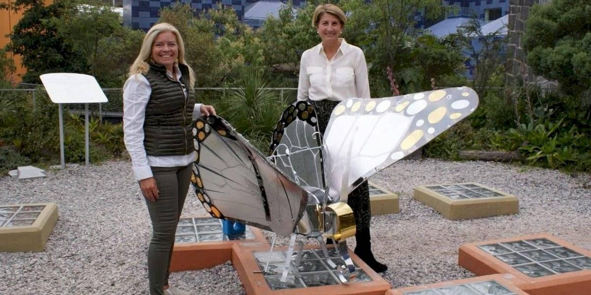 Mariposa Monarca Papalotl llega a Papalote Museo del Niño