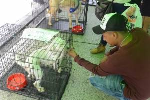 Perros en adopción en el Paseo de la Sexta