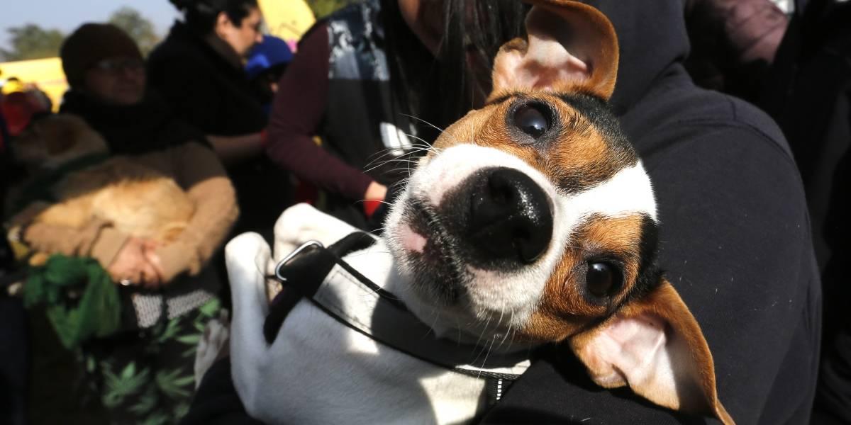 Tras fallo de la Corte Suprema: municipios buscan soluciones para hacerse cargo de los perros abandonados