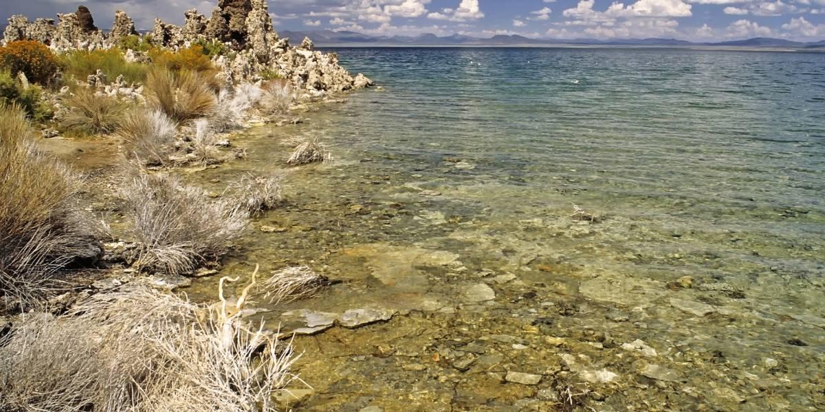 Encuentran una sorprendente especie de gusano de tres sexos en uno de los lagos más inhabitables del mundo