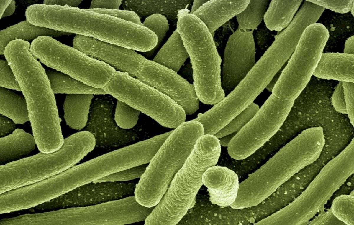 Coronavirus: ¿cuál es la diferencia entre un virus y una bacteria?