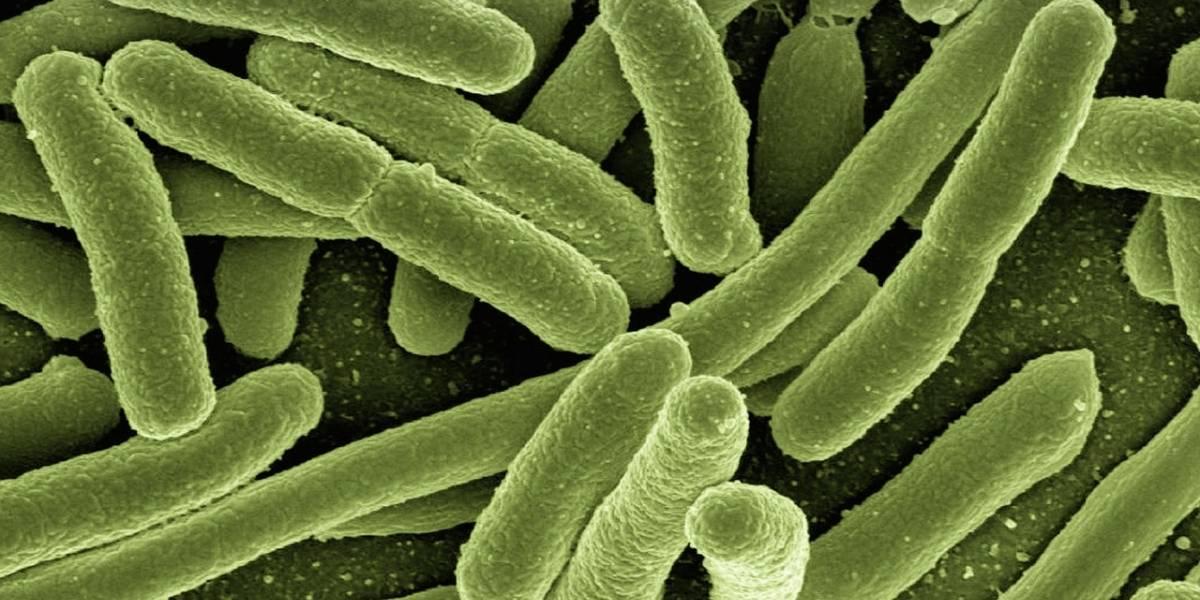 Las bacterias cambian de forma para hacerse más resistentes a los antibióticos