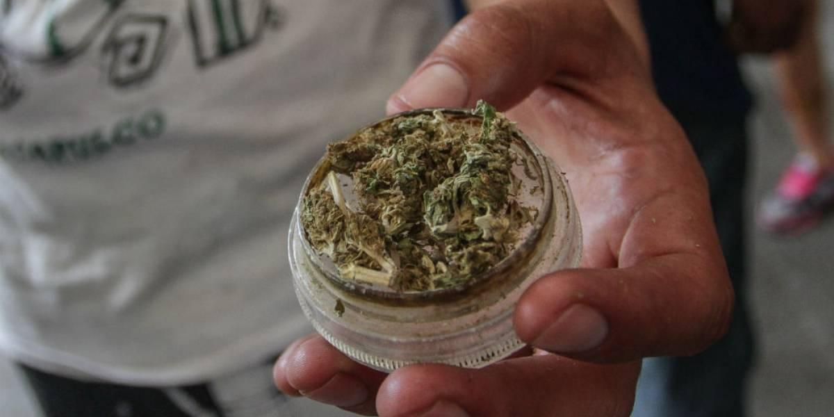 Morena propone crear Cannsalud, mercado de marihuana manejado por el gobierno