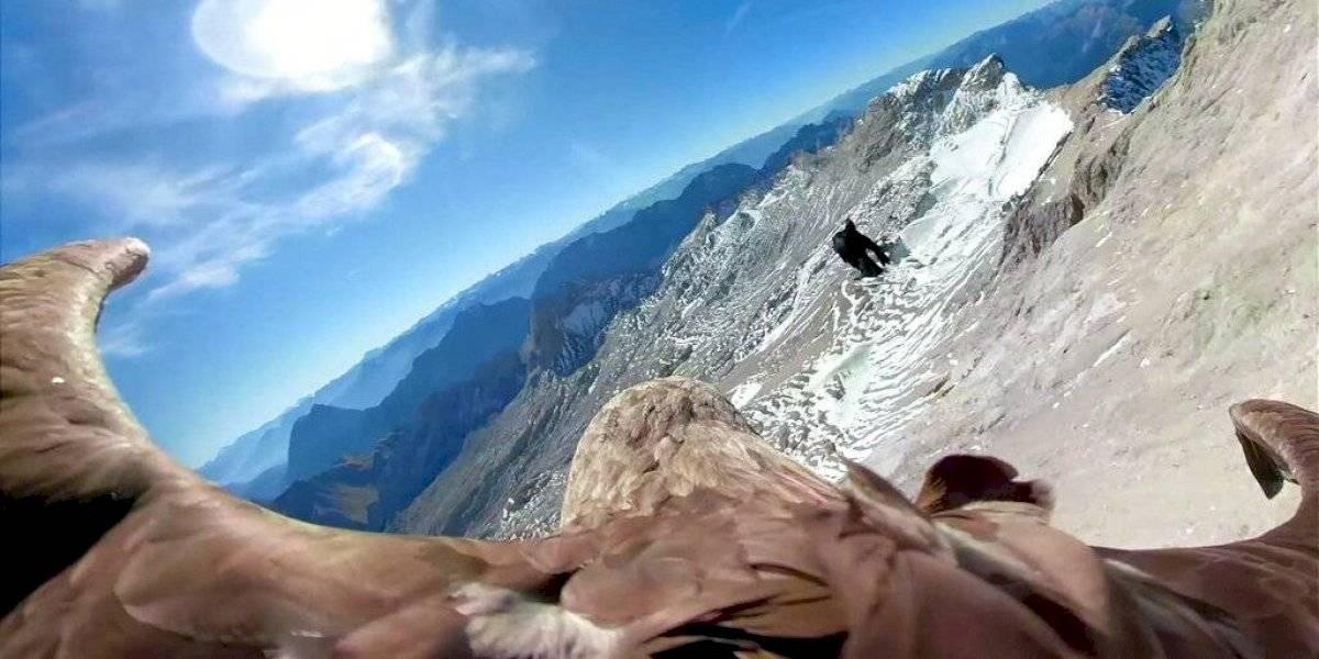 Hermosas y devastadoras imágenes: cámara montada sobre águila revela las impactantes consecuencias en los glaciares por culpa del calentamiento global