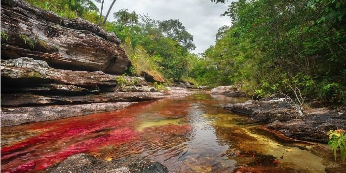 Caño Cristales, el 'arcoíris' de agua considerado el río más hermoso del mundo