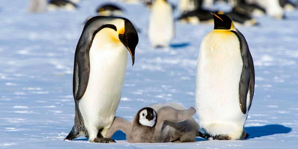 Descubren restos de microplásticos en pingüinos de la Antártica