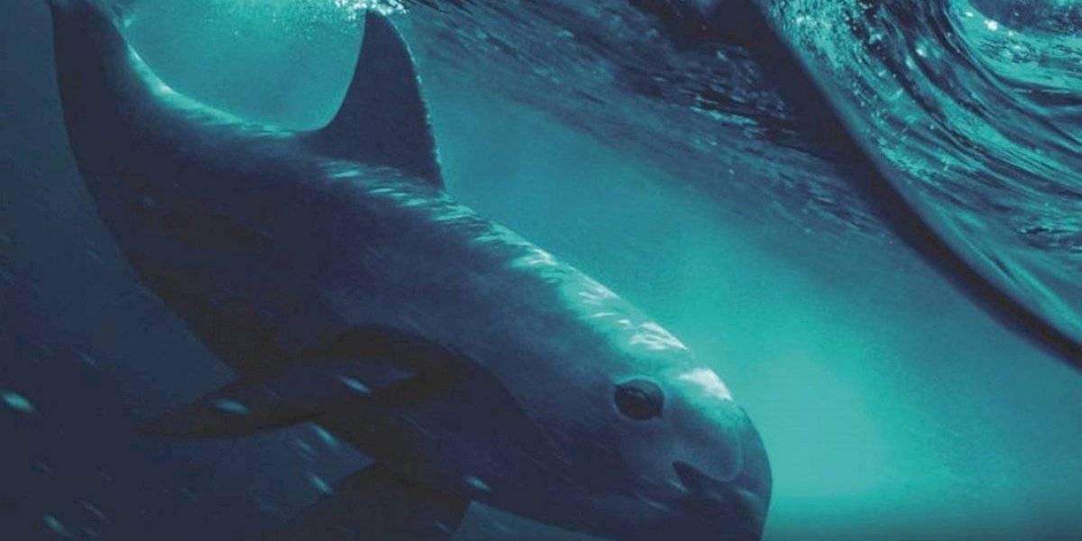 'Mar de Sombras' retrata el peligro de extinción de la vaquita marina