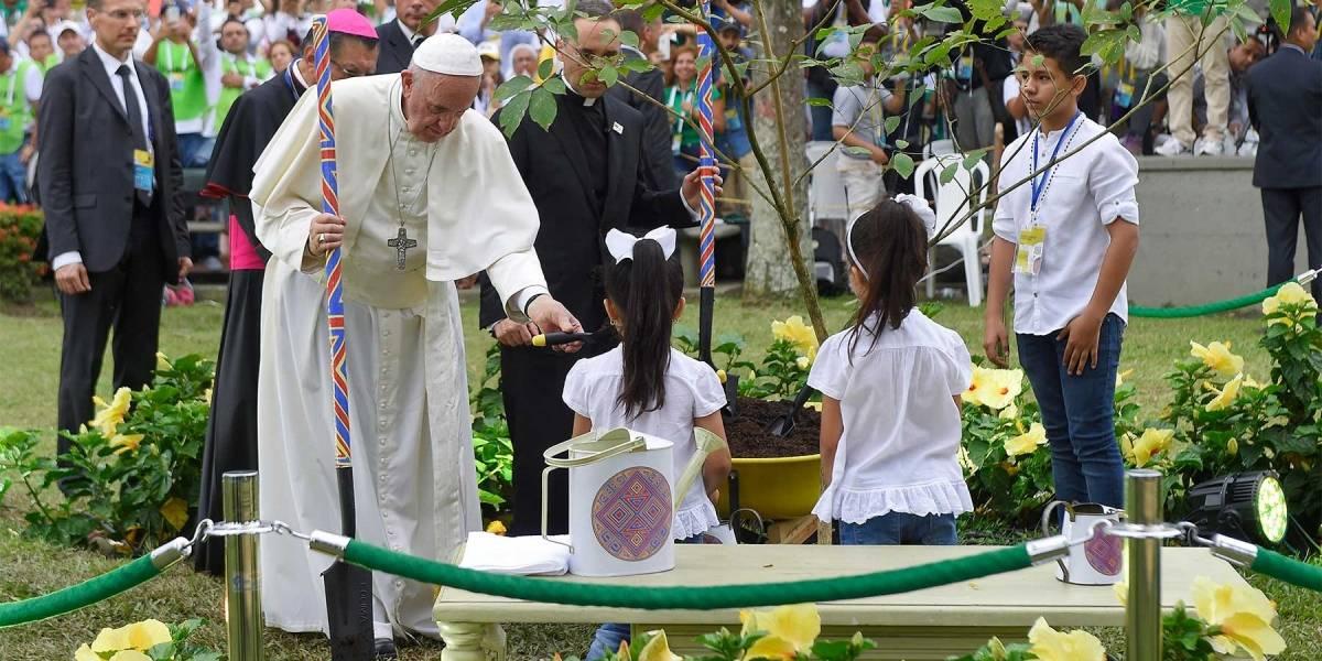 Delincuentes secaron el árbol que sembró el papa Francisco en Villavicencio