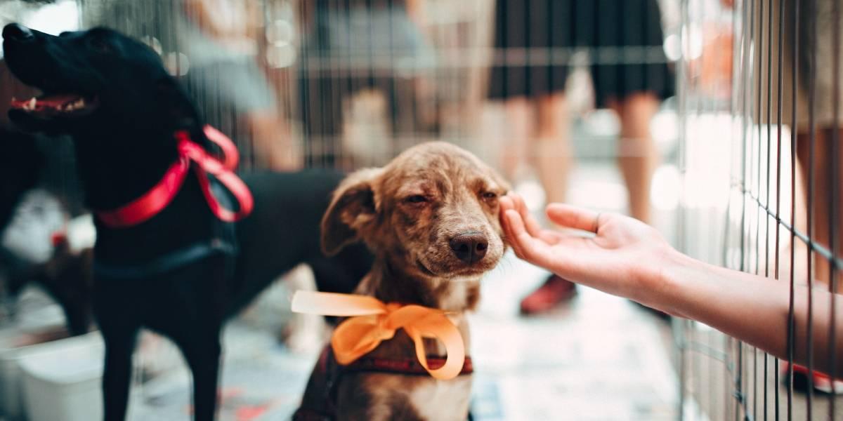 Dia Mundial dos Animais: veja onde adotar ou benzer seu pet em São Paulo