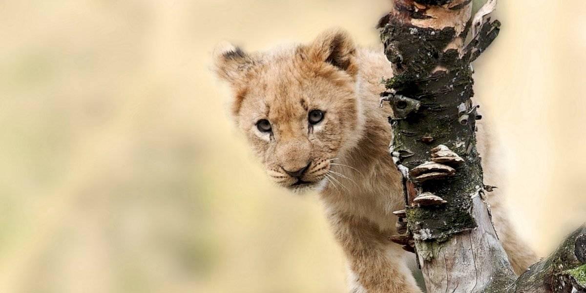 ¿Por qué se celebra el Día Mundial de los Animales?