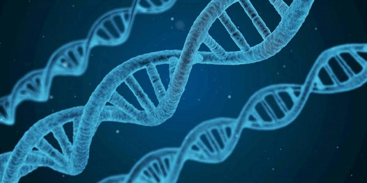 Estão esperando o primeiro filho para o próximo mês de março, mas um teste de DNA comprovou que eles são irmãos