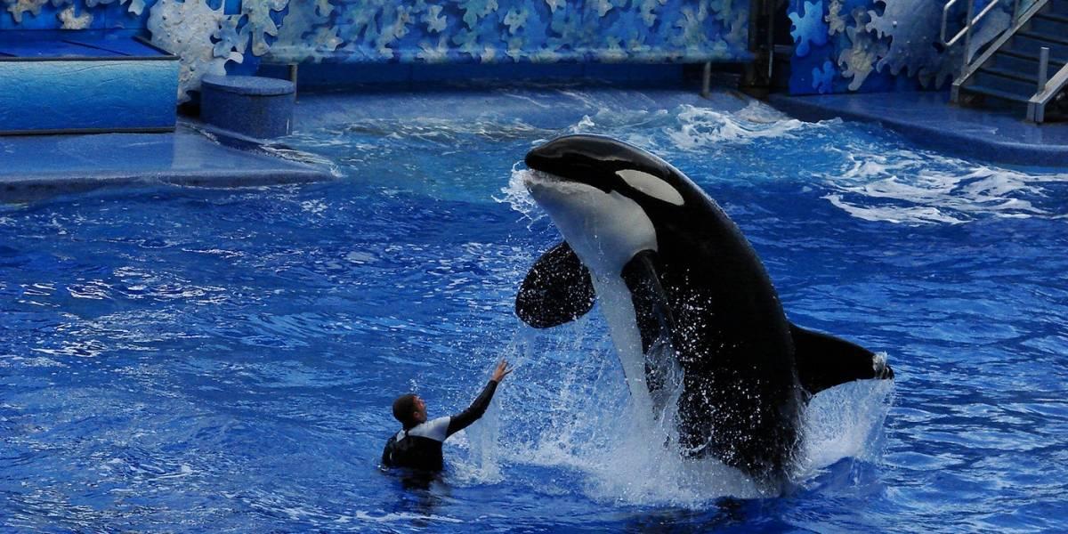 TripAdvisor dejará de vender boletos de sitios que crían ballenas y delfines