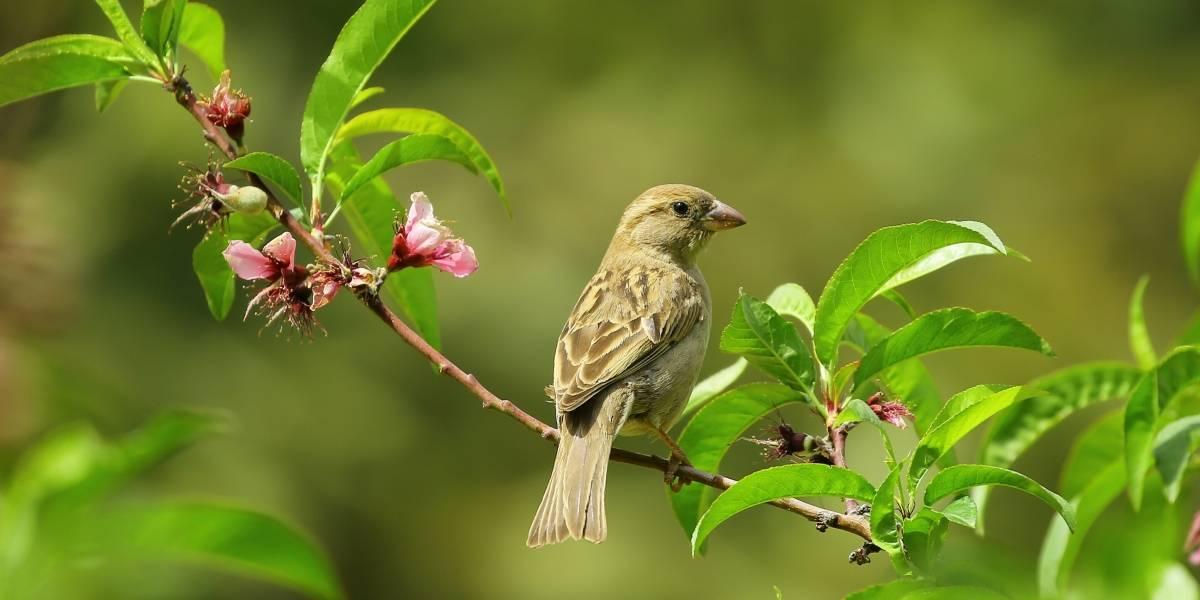 Científicos logran implantar recuerdos en un ave para enseñarle nuevas canciones