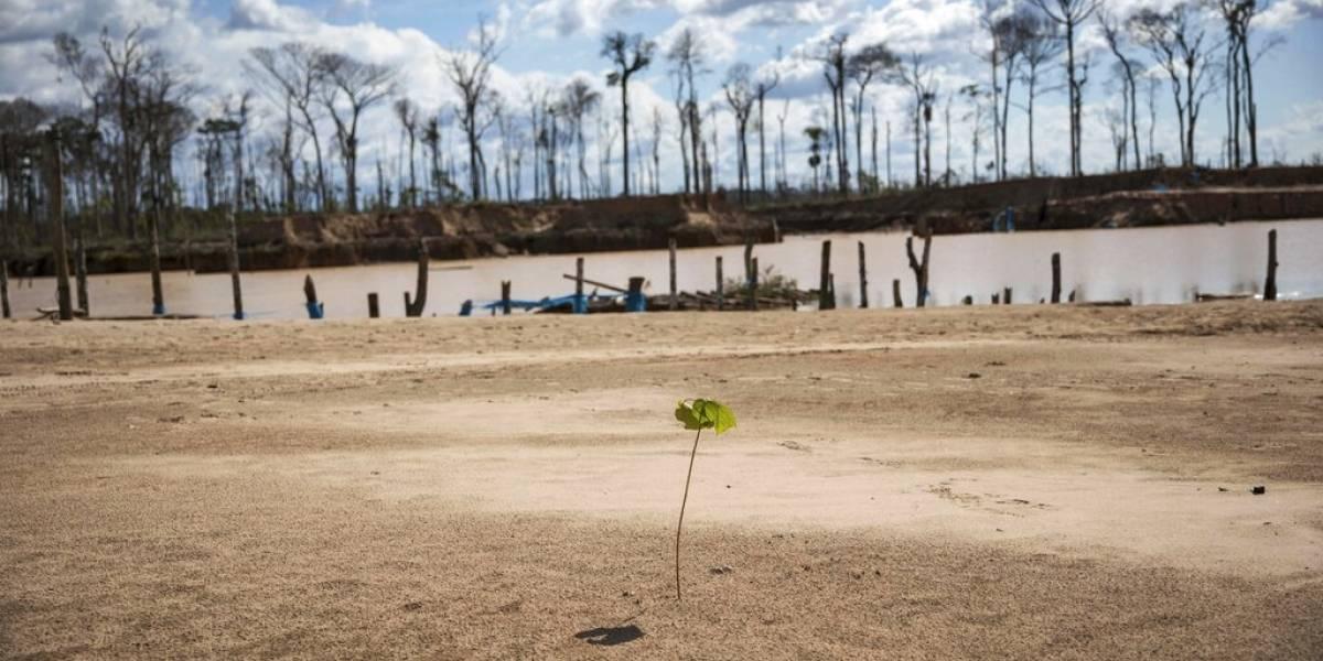 Regenerar los bosques, un árbol a la vez