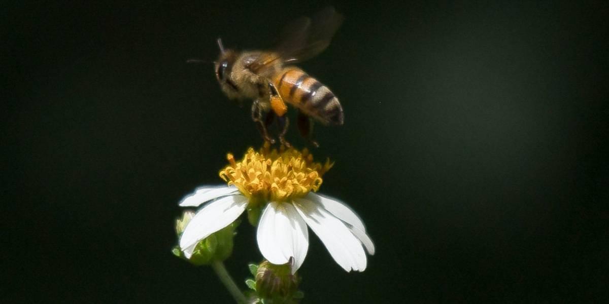 Muere hombre tras ataque de enjambre de abejas en Sinaloa