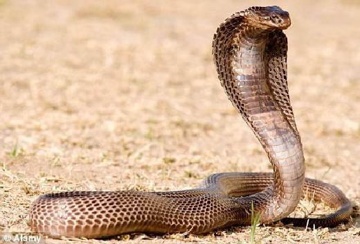 Viral video serpiente