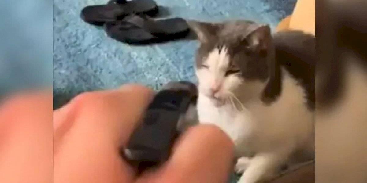 Vídeo de dono tentando 'castigar' seu gato esperto se torna viral nas redes sociais