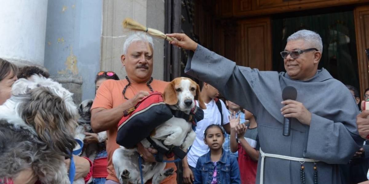 EN IMÁGENES. Mascotas reciben la bendición de San Francisco de Asís