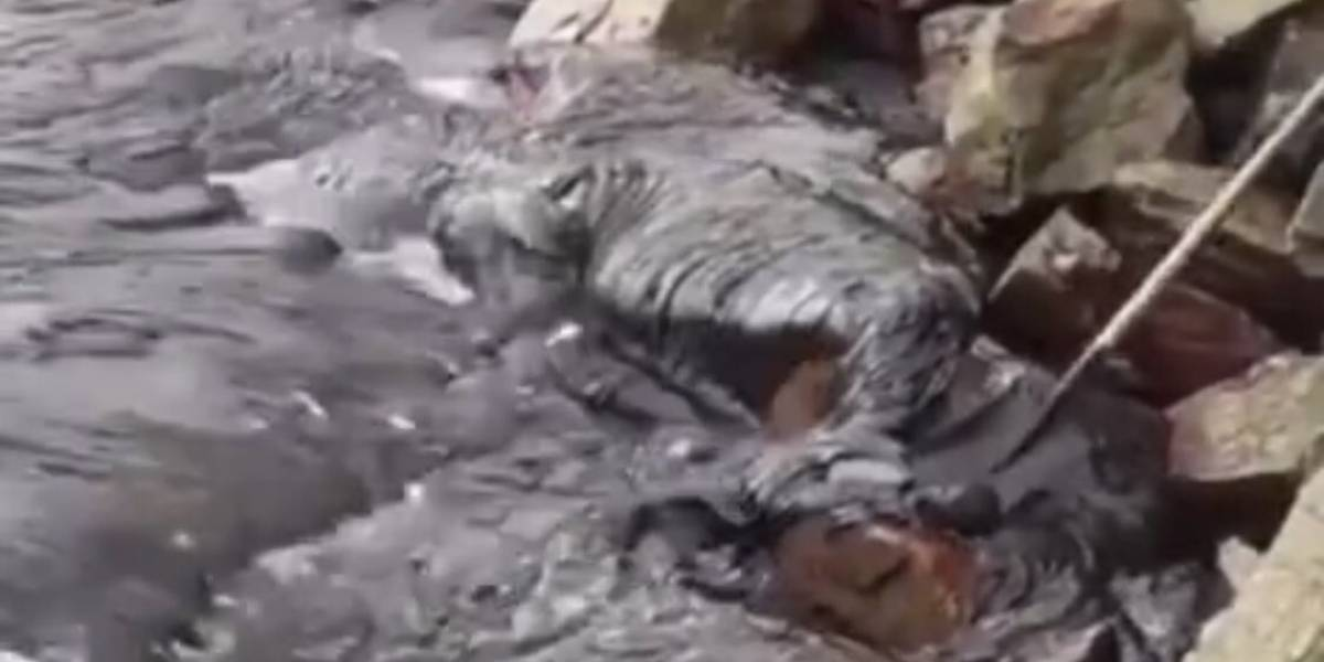 Governo de Sergipe cria gabinete para investigar manchas de óleo nas praias