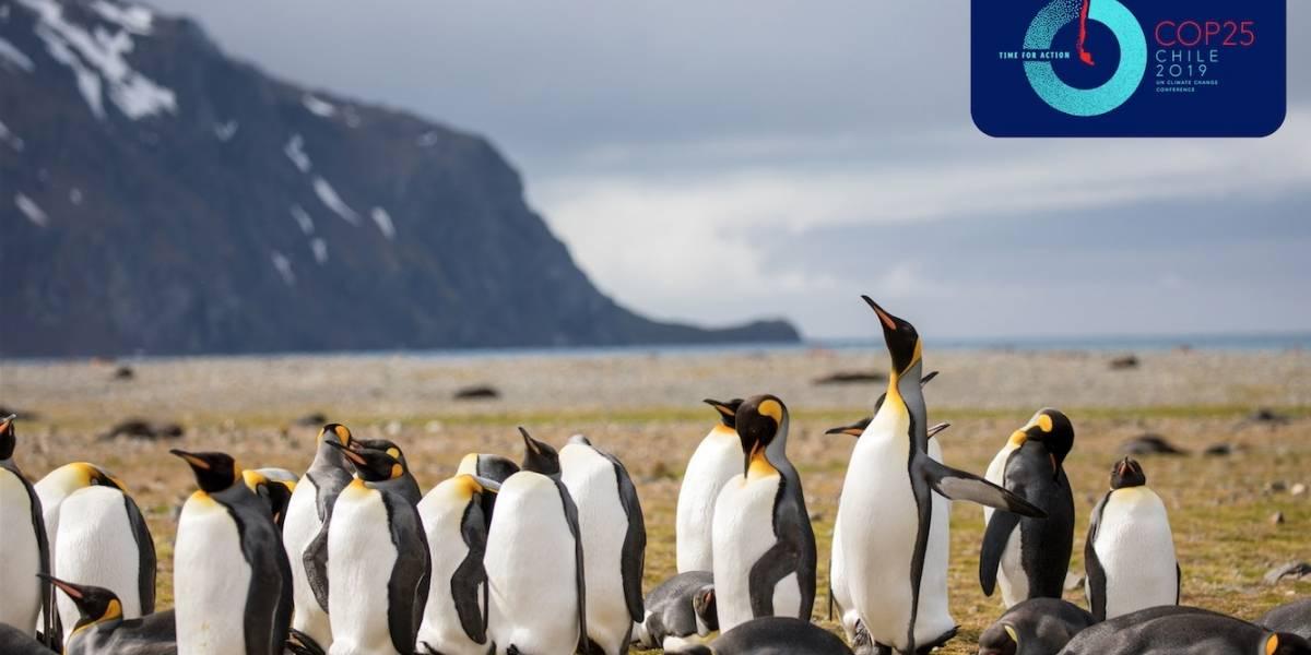 ¿Qué nos jugamos en la COP 25?