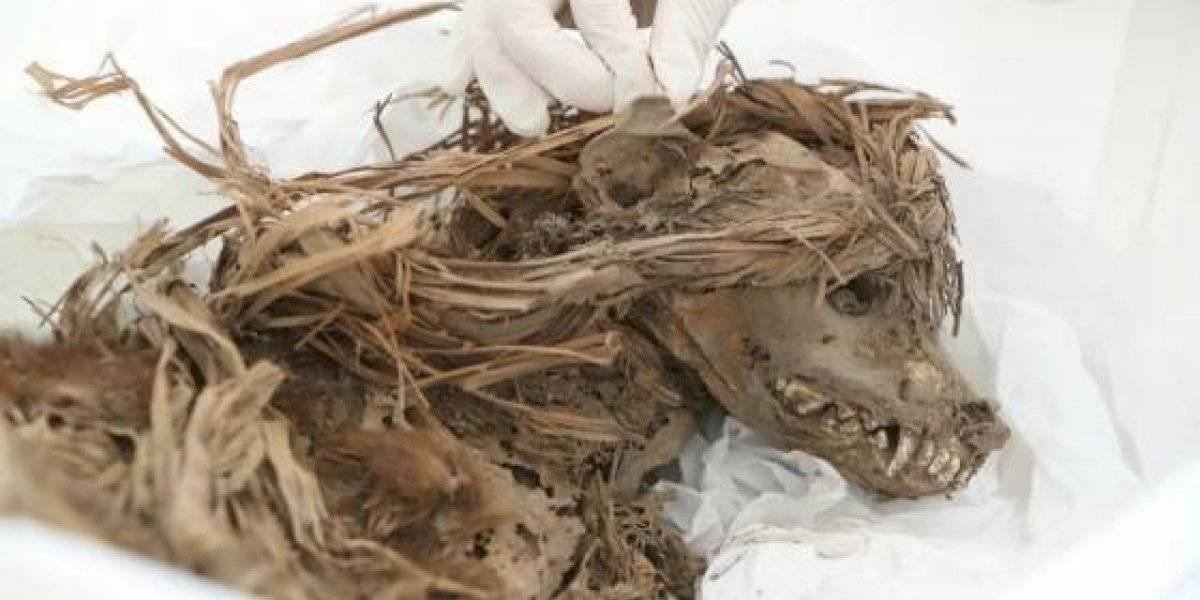 Así luce un perro enterrado hace mil años