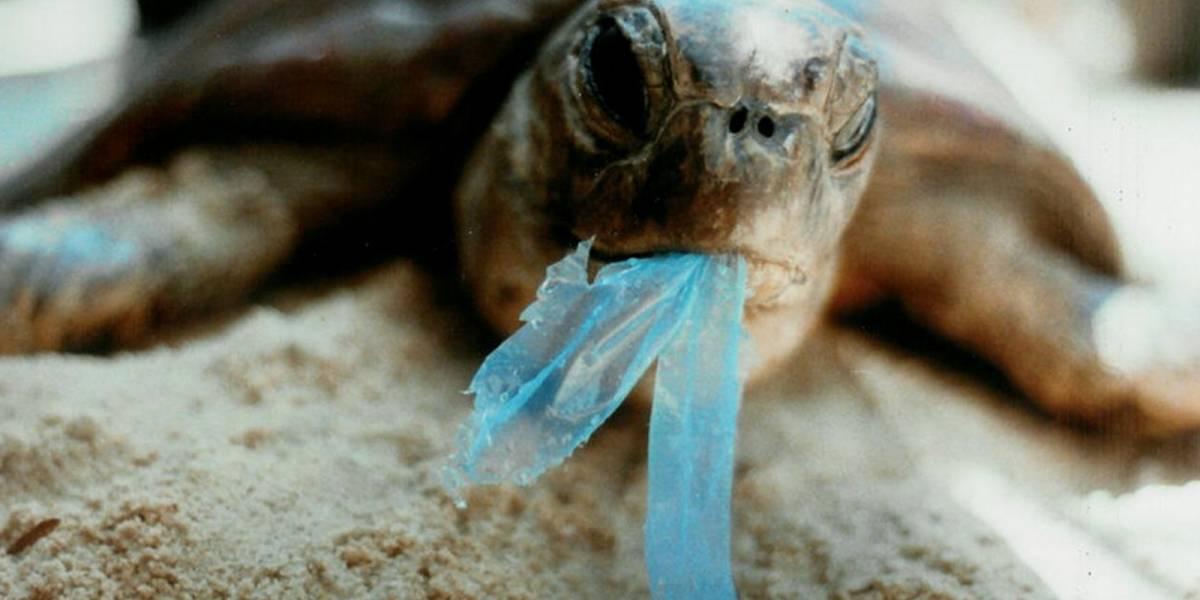 Más de 100 piezas de plástico causaron la muerte de una tortuga marina