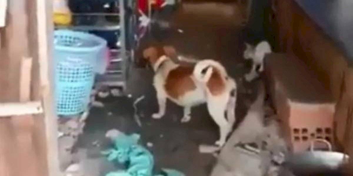 Vídeo de cachorro e gato que se unem para lutar contra rato enorme se torna viral nas redes sociais