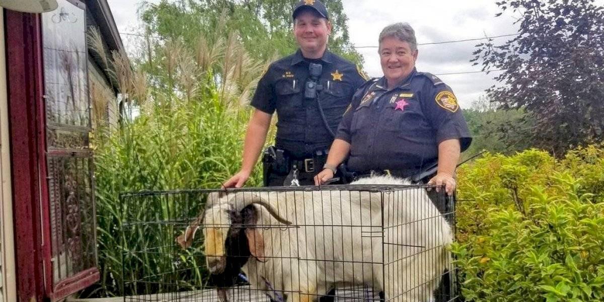 """Homem se torna viral depois de descobrir que o """"criminoso"""" que invadiu sua casa era uma cabra"""