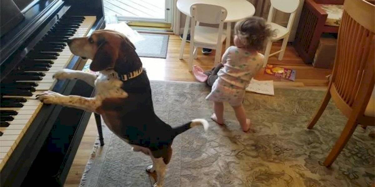 Pai flagra filha dançando enquanto cachorro toca piano e vídeo faz sucesso na Internet