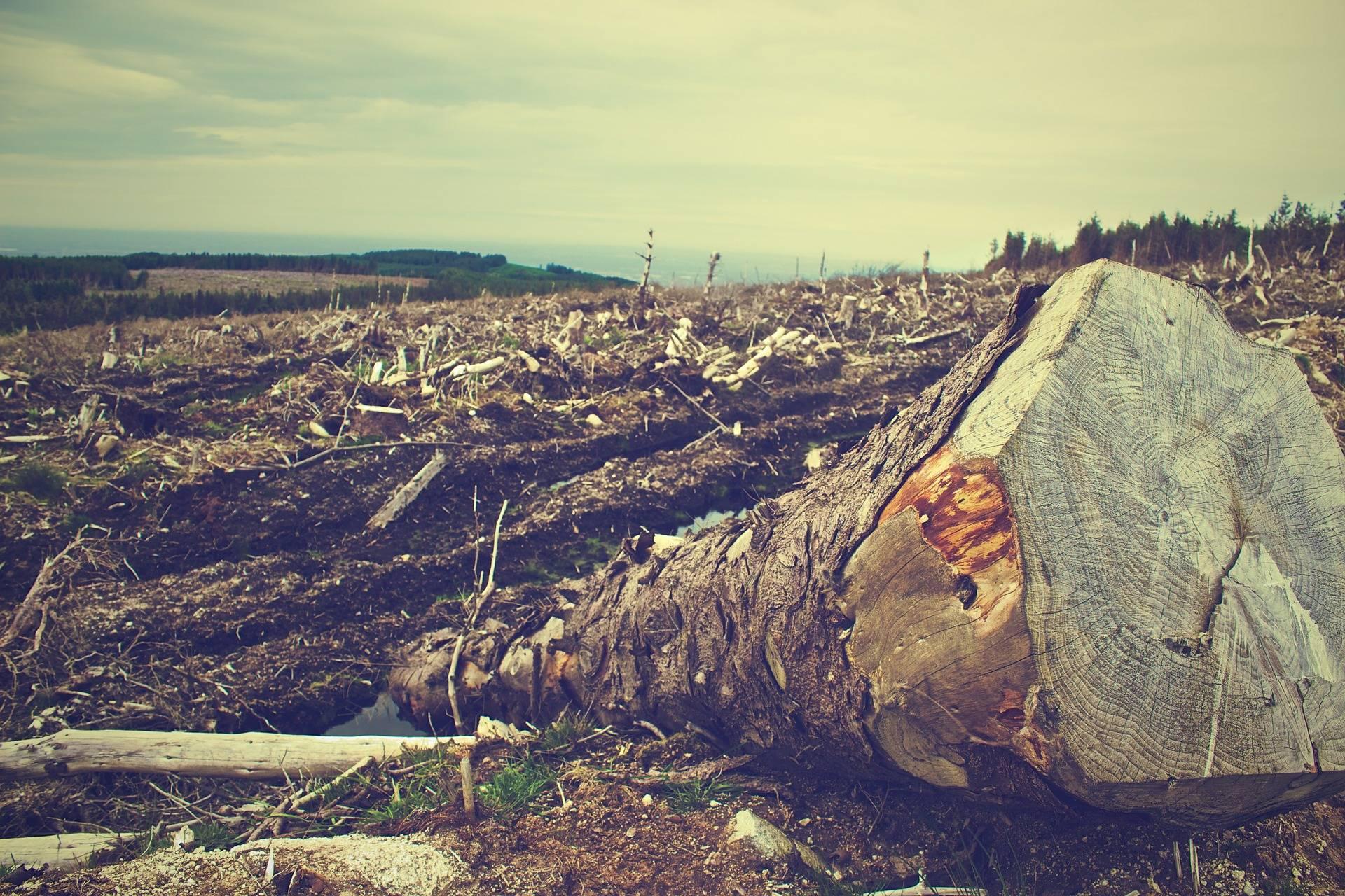 Narcodeforestación: científicos demuestran que la cocaína contribuye al cambio climático