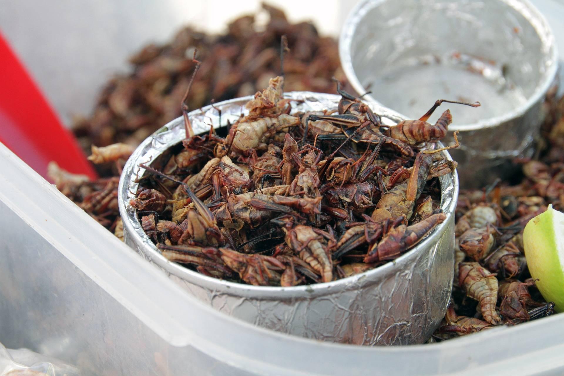 Estos son los alimentos terrestres que podrías comer en Marte