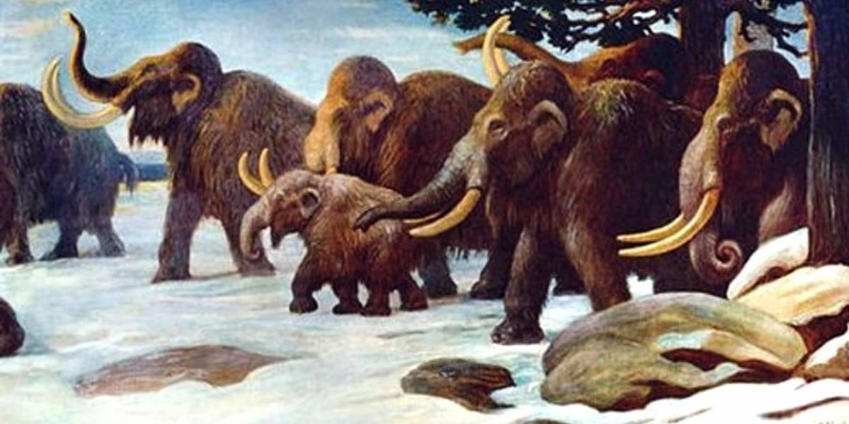 Descubren cómo se extinguieron los mamuts