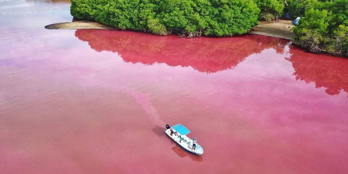 Laguna de Manialtepec, en Oaxaca, se tiñe de rosa