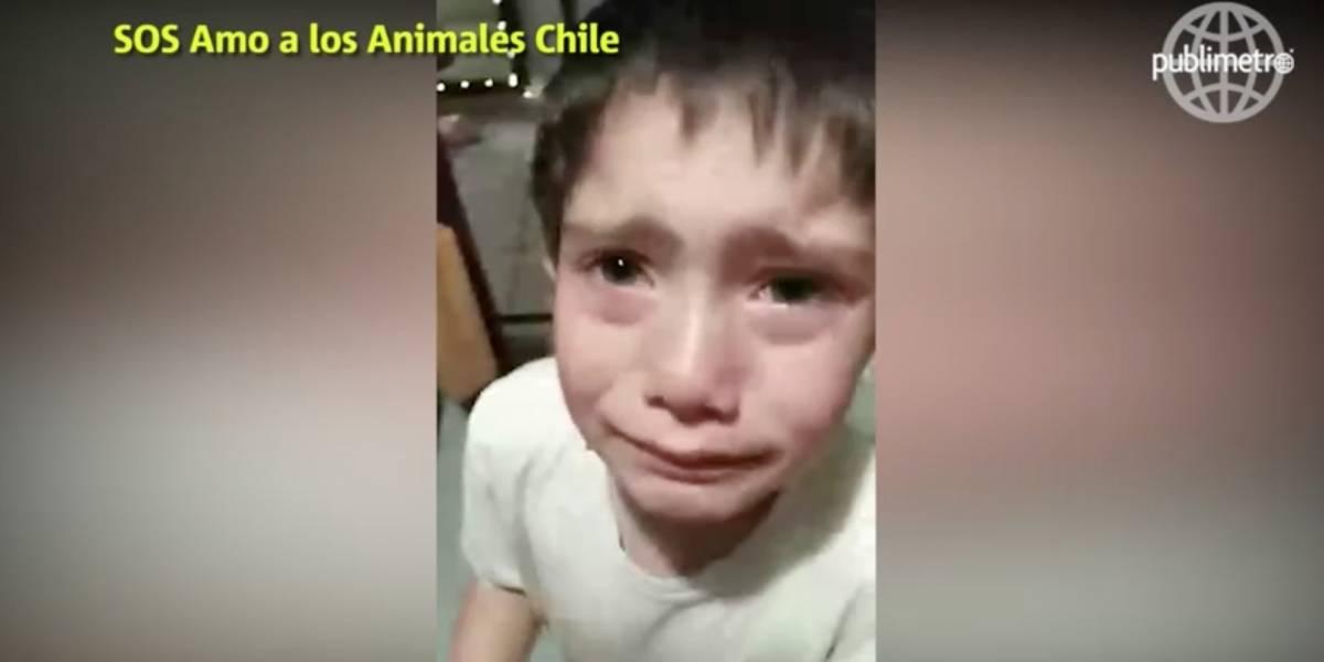 Menino que chora depois de 'atropelar' formiga comove as redes sociais
