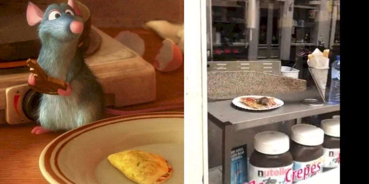 Vídeo de rato comendo crepe em café se torna viral e estabelecimento é fechado
