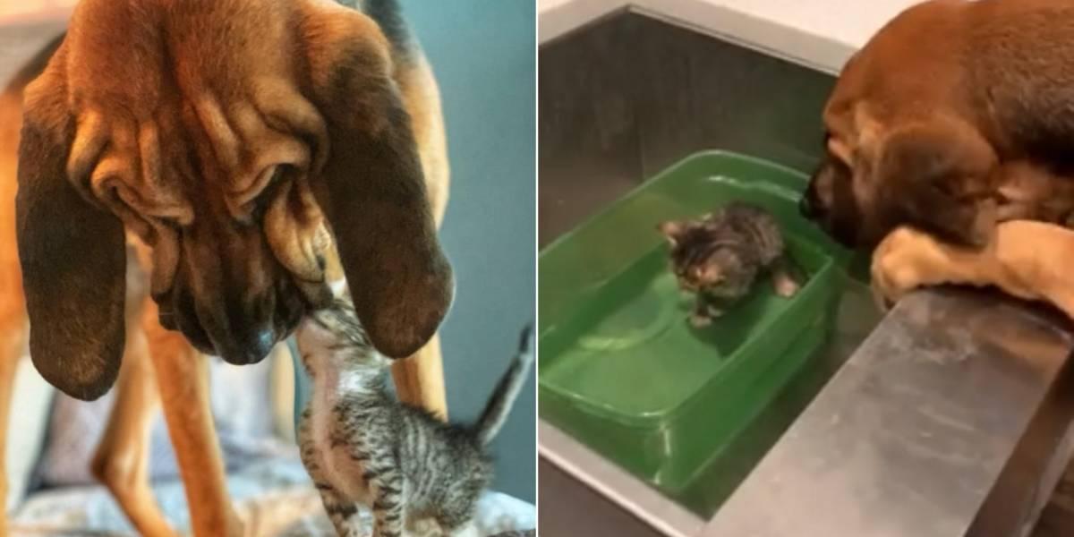 Vídeo de cadela 'consolando' gatinho em abrigo faz sucesso nas redes sociais
