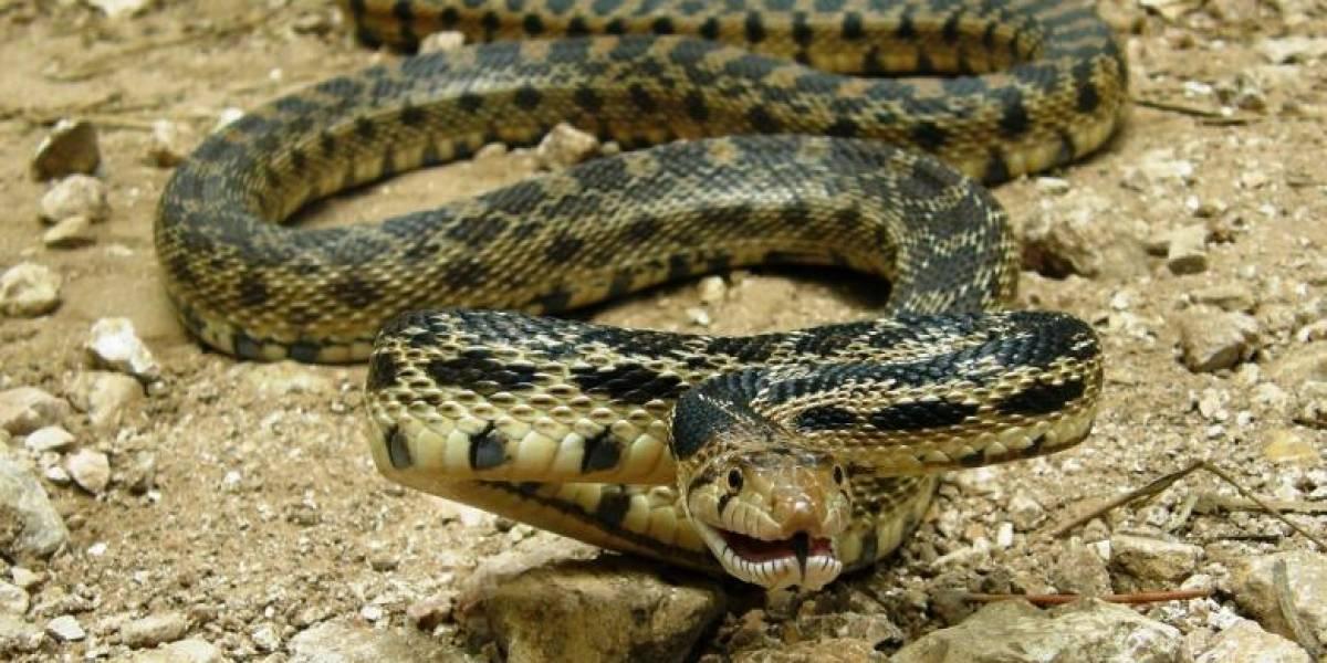 Moradores relatam encontrar pele de cobra de sete cabeças e vídeo se torna viral nas redes sociais