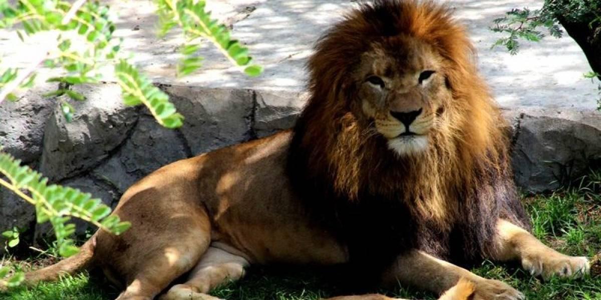 ¿Cómo ayudar? Cierre de vías afecta la gestión del Zoológico de Quito