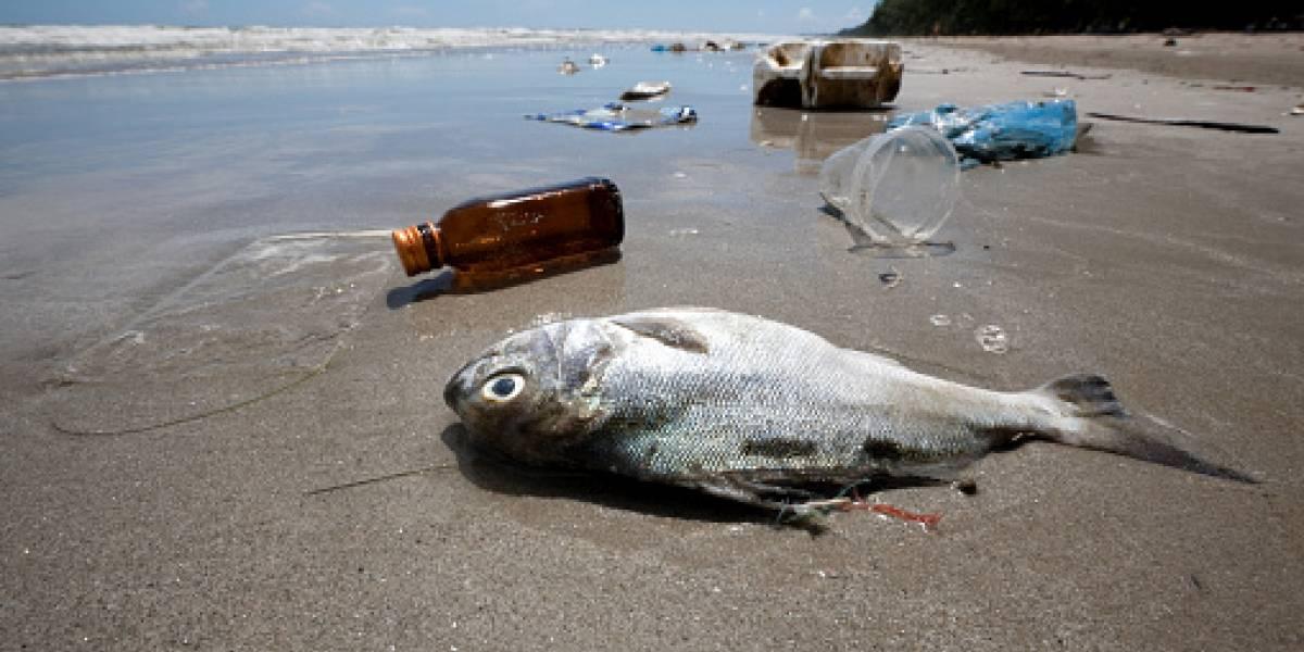 Todo por culpa de los humanos: detectan microplásticos en el 20% de los peces en las costas de México